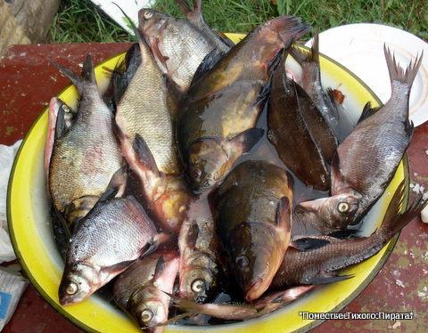 какая рыба ловиться на селигере